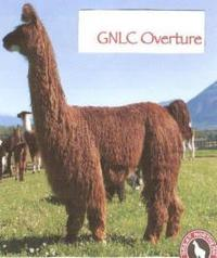 GNLC-OVERTURE