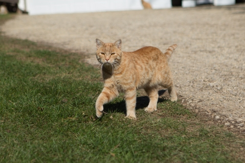 Digit, resident rodent control